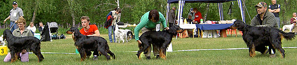 Foto Falcsagans Kennel